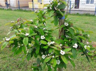 Le verger du lycée Savary-de-Mauléon au fil des saisons